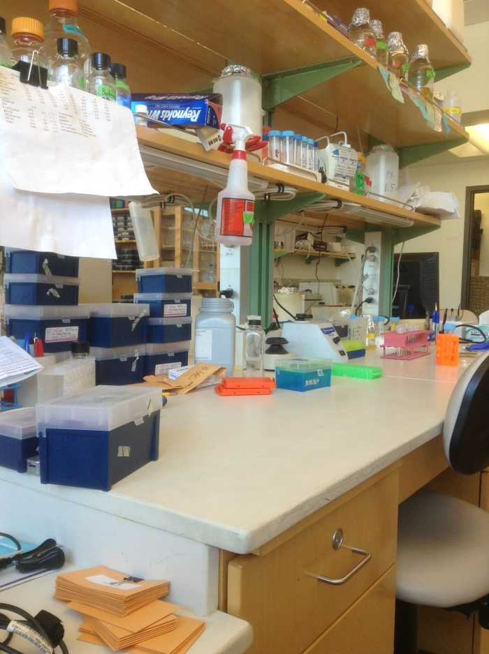 My lab bench at the rice genetics lab I work in.