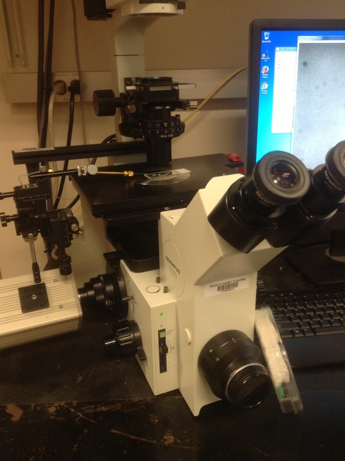 This is the microscope I use to inject DNA into nematode worms.