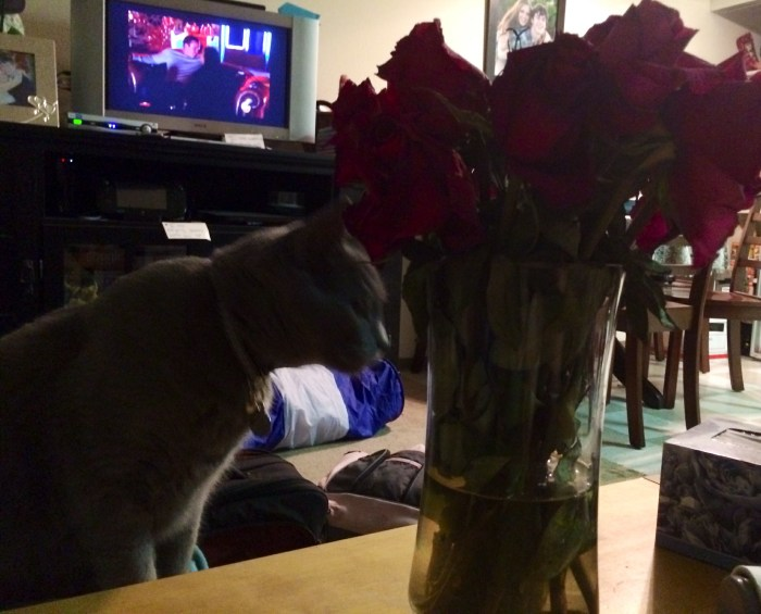 My wife and I watch Bachelorette sometimes. No roses for kitties on the show though!