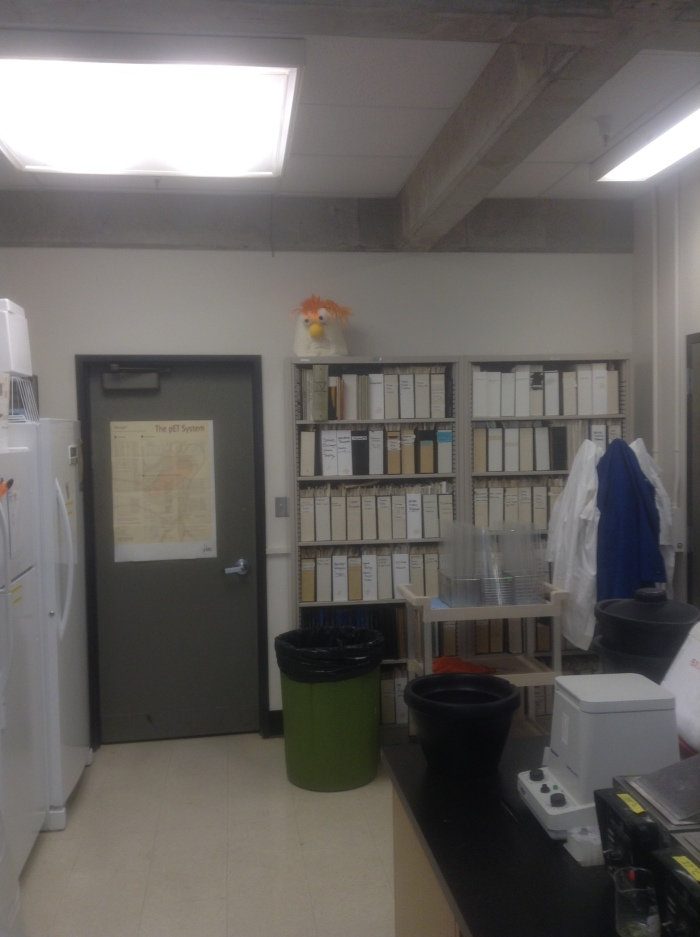 All labwork is overseen by the disembodied head of Muppet lab assistant, Beaker.