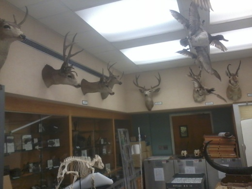 All the deer!